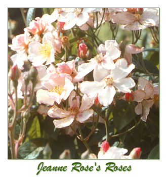 Jeanne Rose Aromatherapy, jeannerose, herbal studies classes, aromatherapy first aid kits
